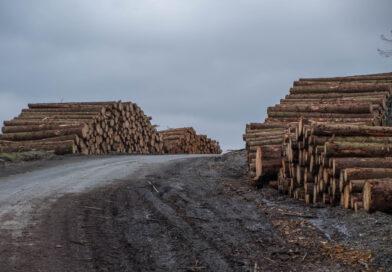 Gepardy Biznesu 2020 Przemysłu Drzewnego i Papierniczego